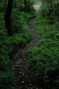 Feel the trail!