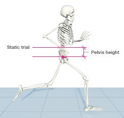 pelvis-height